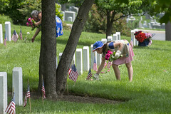One at a time (Tim Brown's Pictures) Tags: arlingtonnationalcemetery arlington va washingtondc memorialday volunteers roses graves