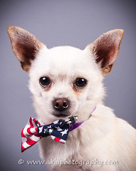 Ranger (Alfred Kirst III) Tags: kirst akiii photography alfred iii iiikirstchihuahuarescueandtransport2142894889ak3 photographyalfred iiialienbeesdogspaul c bufftexasadoptable puppieschaco dogschihuahuachihuahua rescue transportcutecute puppycutieplanozukepetszukes kirstakiii iiialfred iiikirst chihuahuarescueandtransport 2142894889 ak3photography alienbees dogs paulcbuff texas adoptablepuppies chacodogs chihuahua cute cutepuppy cutie plano zukepets zukes puppy