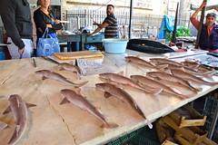 Pisci Palummu - Pesce Palombo - Mustelus mustelus (costagar51) Tags: palermo sicilia sicily italia italy natura pesci animali