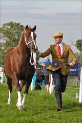 The Chestnut (meniscuslens) Tags: horse lead rein show chestnut bucks buckinghamshire county man tie cap hat grass field paddock arena sky clouds aylesbury weedon