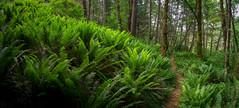 Ferns (ScottyBgood) Tags: scottyandronnyshow mathesonlakepark hellobc beautyofbc vancouverisland tourcanada explorebc lifeincanada canadiandestinations britishcolumbia ilovebc landscapephotography