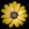 ***Flowers *** (R.Didier) Tags: color fleur macro nature jardin couleur jaune garden flower