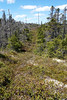 DSC00353 - Maybe this way back!!!! (archer10 (Dennis) 136M Views) Tags: sony a6300 ilce6300 18200mm 1650mm mirrorless free freepicture archer10 dennis jarvis dennisgjarvis dennisjarvis iamcanadian novascotia canada torbay hike mainetrail
