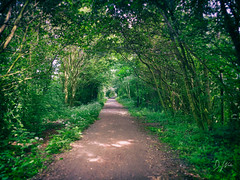 Haswell to Hart Walkway (domwlive) Tags: haswelltohartwalkway trees spring countydurham northeastengland googlenikcollection castleeden haswelltohart landscapes green rural may paths leaves england unitedkingdom gb
