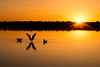 X (O.S. Fisher) Tags: antelopeisland greatsaltlake aimals avians birds flight marina orange seagulls silhouette sky sun sunrise sunset