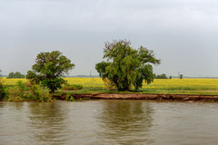 Don River 9 (Alexxx1979) Tags: 2018 may spring весна май russia rostovoblast россия ростовскаяобласть donriver дон река river