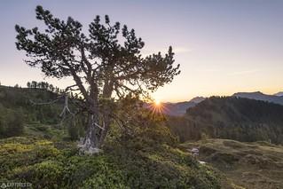 First sun rays - Niederhorn