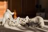Snuggle Up!! (BGDL) Tags: lightroomcc nikond7000 nikkor50mm118g bgdl niftyfifty odc crittercats shadows three