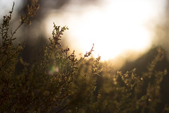 Glimpse of the Sun (Yoann Gauthier) Tags: 100d sunset thorny brushes sun overexposed fontainebleau france