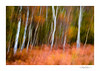 Autumn Impression (George-Edwards) Tags: landscape icm intentionalcameramovement slowshutter longexposure trees leaves ferns bracken colour autumn fall birch outdoor rural countryside heath moor blur wildlife nature seasons woodland forest abstract snelsmore berkshire georgeedwards