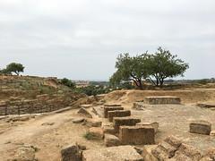 IMG_0430.jpg (Darren and Brad) Tags: sicilia italian valledeitempli sicily italy italia valleyofthetemples agrigento ancientgreek archeology it