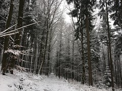 Winterscape (Mihaela_gor) Tags: winter winterscape cold weather frozen white trees forest forestscape landscape nature outdoors scenery path woodland wood germany deutschland