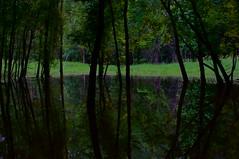 The Dark Mirror (FiddleHiker) Tags: reflection trees green fortsnellingstatepark minnesota summer supertakumar50mmf14 sliderssunday slidersunday reflectionsoftheworld symmetry nature nightphoto longexposure landscape