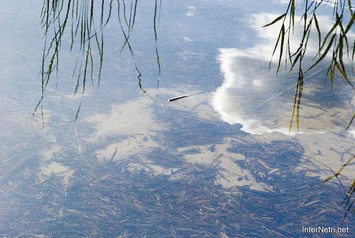 Шацький Національний Природний Парк Озеро Луки Перемут InterNetri  Ukraine 09