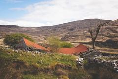 Fallen Roof (Lord Demise) Tags: canon 70d irland ireland kerryway hiking trekking backpacking wandern tour camping decay verfall stall weide natur landschaft landscape nature tree baum roof dach wall mauer