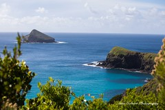 Mutton Bird Point, Lord Howe Island (Anna Calvert Photography) Tags: australia lordhoweisland adventure island landscape nature outdoors scenery sunrise beach lordhowe rocks surf dawn water muttonbirdpoint muttonbirdisland palms