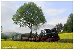 Pollo - 2018-26 (olherfoto) Tags: bahn eisenbahn schmalspurbahn museumsbahn kleinbahn dampf dampflok dampfzug pollo prignitz vasut kisvasut rail railway railroad narrowgauge steam train steamtrain