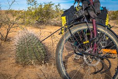 This cactus was super strong and able to support the bike.