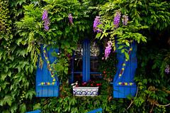 Concarneau (Massimo Frasson) Tags: francia france bretagna bretagne breizh bzh finistère concarneau centrostorico oldcity pittoresco architettura arte medioevo finestre albero foglie azzurro glicine
