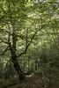 Hayas  7829 (tonygimenez) Tags: bosque rio agua naturaleza valles montaña cascadas niene