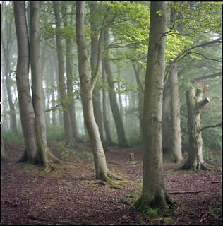 Royston woods