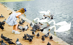 The girl who whispered in the ears of the birds (Stéphanie Delchambre) Tags: fille girl swan pigeon cygne park