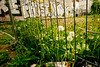 Schulterblatt, Hamburg (difridi) Tags: difridi hamburg schanzenviertel schanze graffiti pusteblume löwenzahn blume flower urban schulterblatt dandelion blowball abandoned