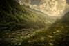 Evenings in the valley... (Giacomo della Sera) Tags: valley valle atardecer evening sunset soleado amarillo yellow verde green plants plantas photography fotografia arboles trees bosque forest españa spain