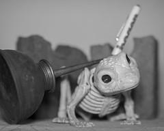 untitled (N.the.Kudzu) Tags: tabletop stilllife frog skeleton canon70d manualfocus primelens zenitar50mmf12 bw lightroom