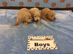Roxie Boys pic 2 6-10
