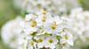 Blurring (Nicola Pezzoli) Tags: italy val gandino seriana leffe ceride nature plant bokeh canon macro fiore flower
