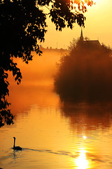 Sounds Of Silence (Idreamofpies) Tags: chester cheshire rngland uk britain gb river dee waterway morning sunrise clour yellow golden swan bird ripples tree leaves canon mist church spire contrast water flow ©idreamofpiesphotography gliding