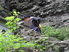 DSC00117 (sabrinasebronasedona) Tags: watkinsglen portrait nature landscape waterfall greenery hiking outdoors upstatenewyork newyork fingerlakes fingerlakesnewyork summer