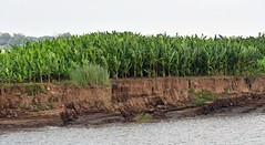 Plantations on the Riverbank - The Mighty Mekong. (One more shot Rog) Tags: rivers river mekong mekongriver cambodia vietnam nam boats boat riverpeople boatpeople asia riverlife livingonaboat floatingvillages