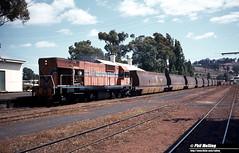 3497 N1872 empty woodchip train Bridgetown 22 February 1983 (RailWA) Tags: railwa philmelling westrail 1983 n1872 empty woodchip train bridgetown