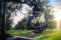 Chasing sunrise through an olive grove (nickwilloughby) Tags: cinematography cinematic filming photography bokeh wrxsti subaru canon 6k reddragon shotover movie work travel roadtrip 35mm 16mm xf xt2 winery vineyard fujiframez fujifeed fuji fujifilm tvc commercial tv audi bts behindthescenes filmmaking film nz newzealand napier olivegrove winter summer sunset sunrise sun