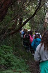Australia_2018-164.jpg (emmachachere) Tags: subtropical trees hike waterfall boatride springbrook australia rainforest kanagroo animals koala brisbane boat lonepinekoalasanctuary