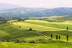 val d'Orcia-024 (bonacherajf) Tags: italia italie valdorcia poderebelvedere tuscany toscane