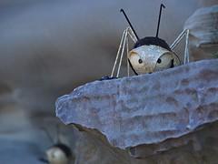 look who's here (nisudapi) Tags: insect bug antennae ledge janakilele lele sxs sxs2014 2014 sculpturebythesea sculpture art artist exhibition outdoor sydney australia bondi