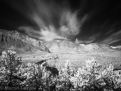 _5210420 (Hyperfocalist) Tags: canada infra red trees bowriver water valley rocky muntains forest alberta