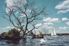 Two Hearts.. (u c c r o w) Tags: wannsee lake swan sailboat sailing landscape water beach nature island uccrow tree blue new 2018 white germany berlin deutschland almanya sailor boat clouds