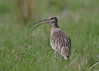 Curlew (Martial2010) Tags: curlew angus glen canon