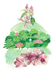 Landscape (Sharon Farrow) Tags: landscape rhododendrons flowers plants green spring norfolk cromer nature pattern drawing painting illustration illustrator illustratedlandscapes sharonfarrow springtime trees uk britain countryside decorative paint pencil pen pink