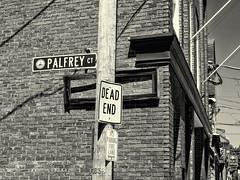 Palfrey Ct (PAJ880) Tags: palfrey court salem ma bw momo urban signs