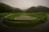 Rain of plum. (Yasuyuki Oomagari) Tags: rice curve misty rain june mountainside rural country countryside green guardrail nikon d810 rainy 14mm japan kyushu saga 日本 九州 佐賀県 梅雨 田植え 田んぼ 霧 ガードレール fog