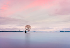 Separated at Birth (ajecaldwell11) Tags: xe3 sunrise ankh purple water fujifilm light trees newzealand tree pink willow taupotree sky laketaupo longexposure caldwell clouds dawn