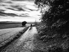 It is better to find ourselves where we are free (muntsa-joan-BW) Tags: blackandwhite bw barcelona camino catalonia clouds campo arboles rural landscape olympus