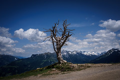 Hiking in Austria (andmang) Tags: penken olympus landscape austria olympusomzuiko28mm128 östereich zuiko28mm sonya7ii blue wandern tree flowersplants tyrol green zillertal hiking omsystem