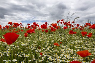 flores al cielo (_DSC5127)