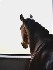 DSC_4551 (emina.knezevic) Tags: equestrian equestrianphotgraphy horses animals animalphotography pets petpotography nature horseportraits